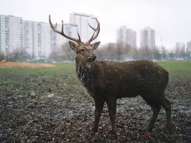 Deer, 2013