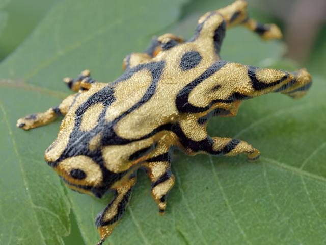Bug Specimen Series